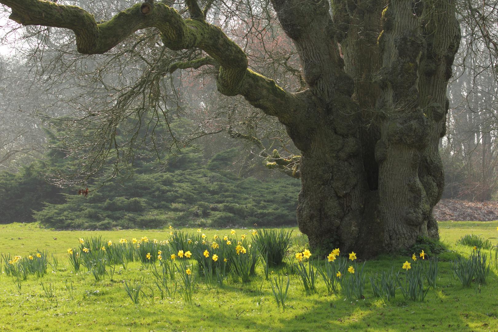 Der Höhlenbaum