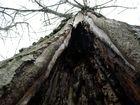 Der hohle Baum