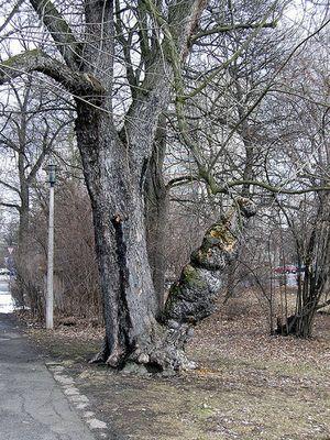 Der Holz-Bong
