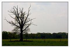 der Holzmichelbaum