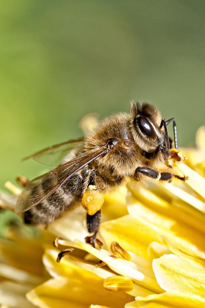 der Honig wird schmecken