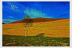 Der Hügel am PHOENIX SEE