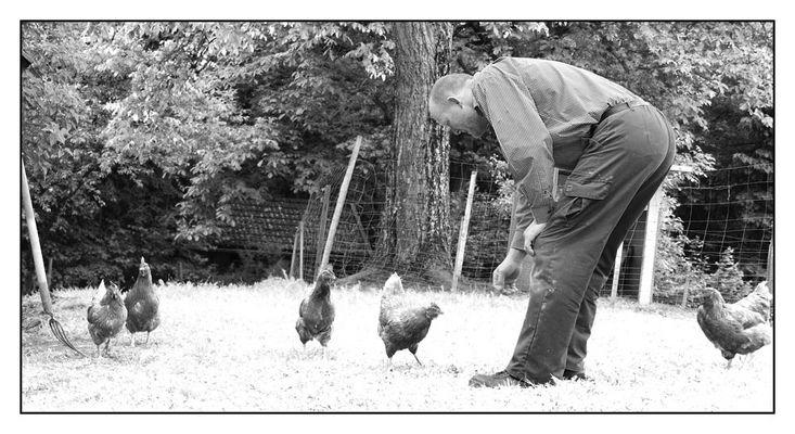 Der Hühnerfänger von Schardenberg