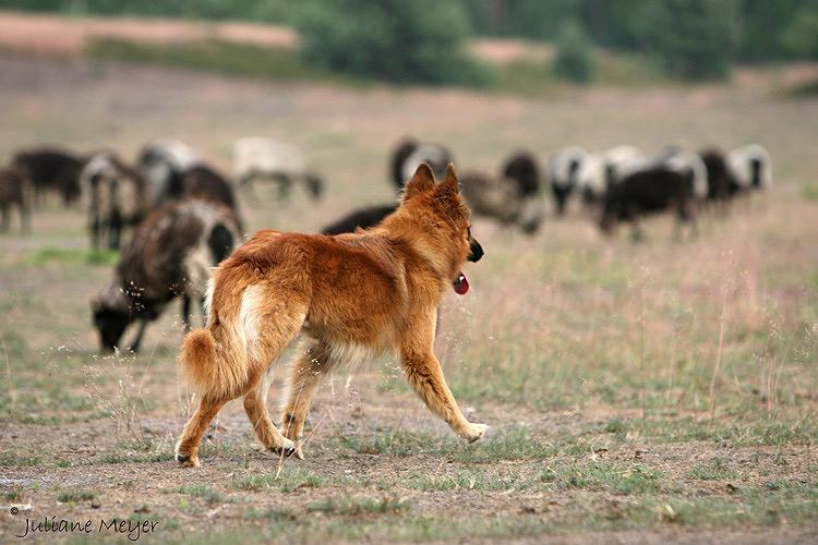 Der Hüter mit Herde