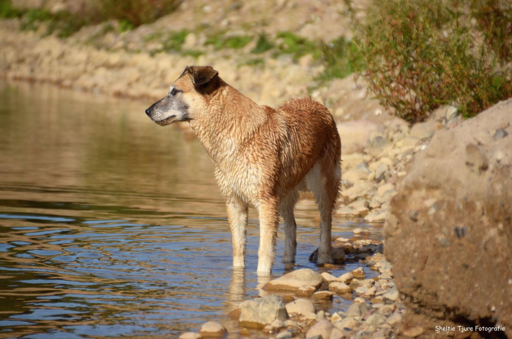 Der Hund am See