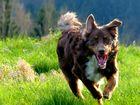 Der Hund, der größte Freund vom Menschen