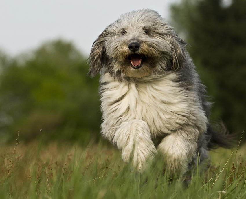 Der Hund der sein Herrchen überrennen will