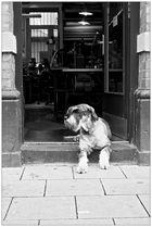 Der Hund des Hutmachers