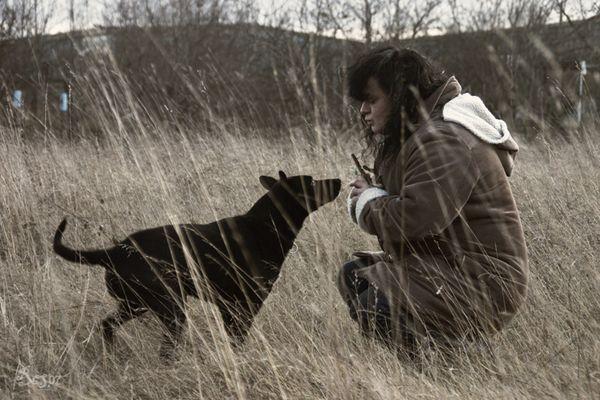 Der Hund im Feld