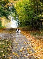 Der Hund ist das einzige Wesen auf Erden, das dich mehr liebt, als sich selbst.
