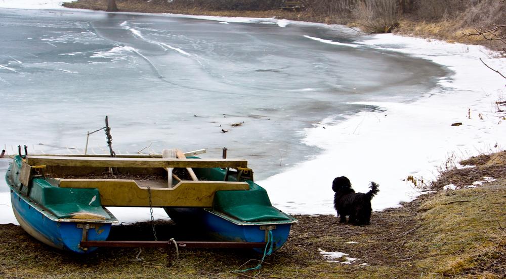 Der Hund und das Meer