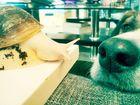 Der Hund und die Schnecke