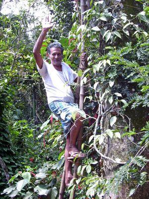 Der indische Gärtner ...