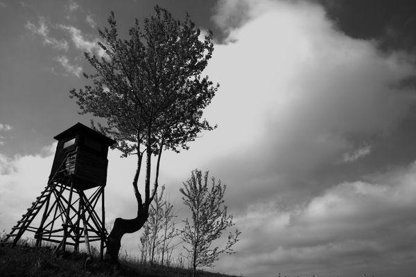 der Jägerstand am Rande des Rapsfeldes