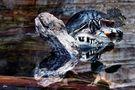 Der Kaiman und die Schildkröte von Juan