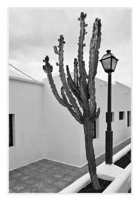 Der Kaktus, die Laterne, das Haus