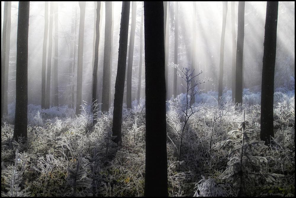 der kalte Wald