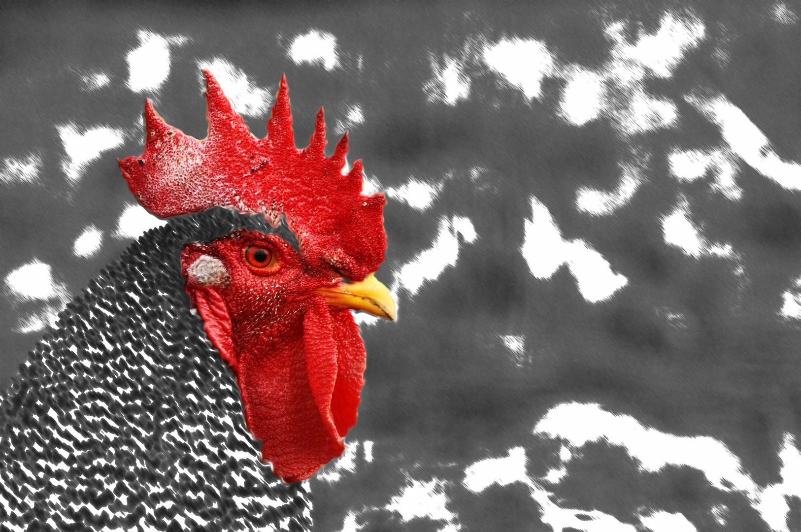 Der Kamm vom Hahn