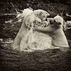 Der Kampf der eisigen Bären