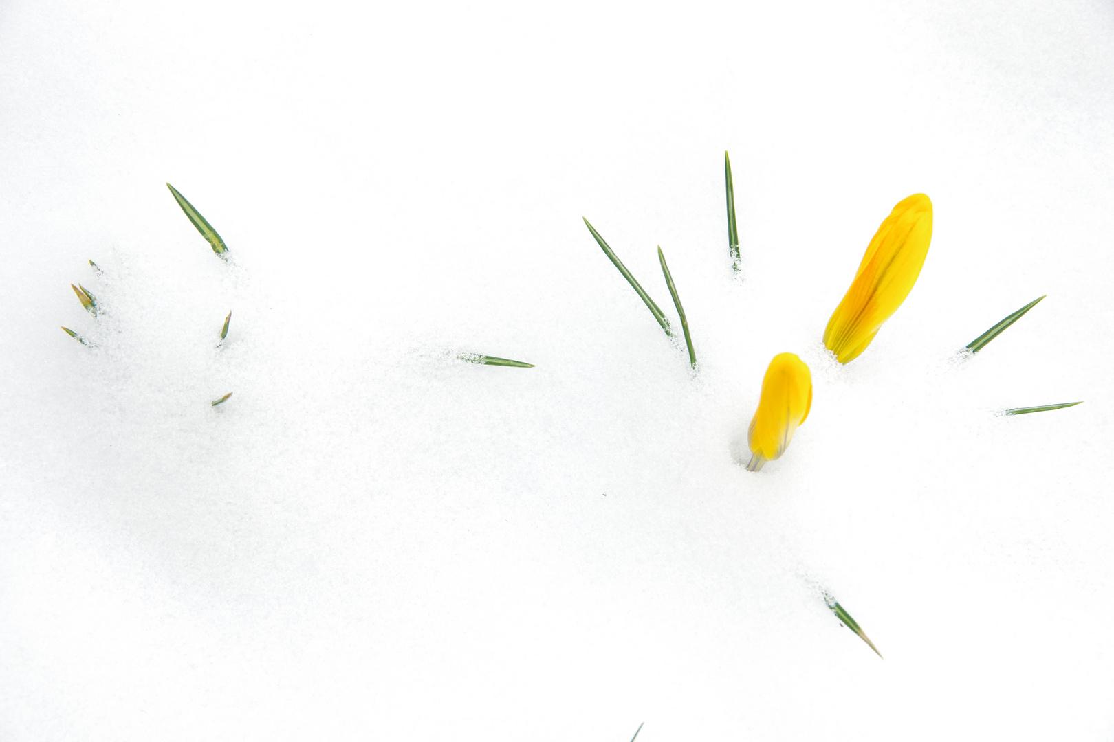 Der Kampf der Jahreszeiten