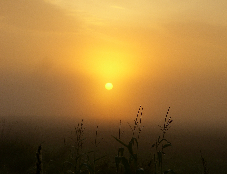 Der Kampf der Sonne ....