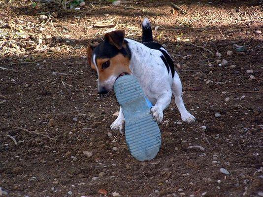 Der Kampf mit dem Schuh