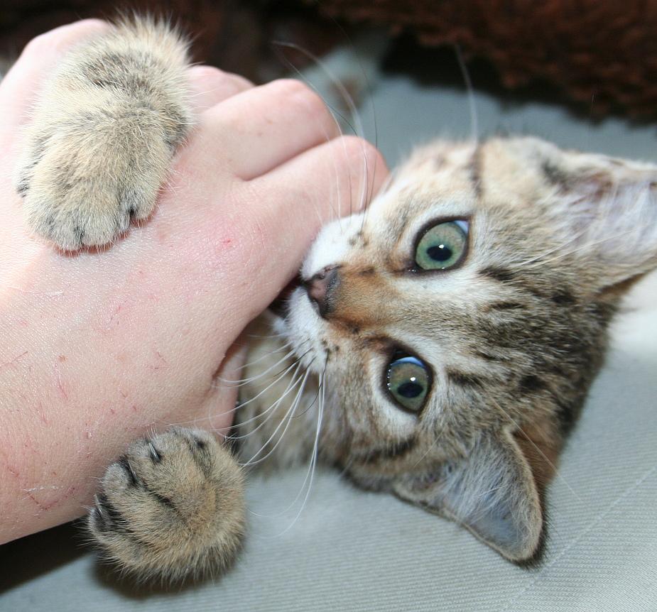 Der Kampf mit der Hand..aua ;-)
