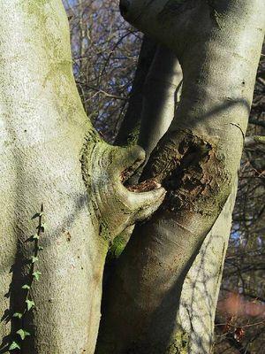 Der kanibalistische Baum
