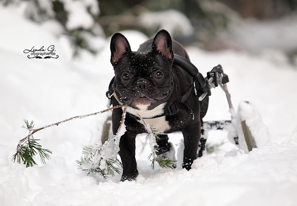 Der Karlie in Tirol beim Wintersport