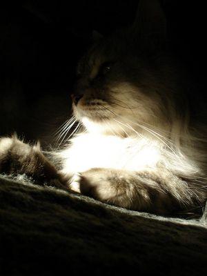 Der Katze in der Abendsonne