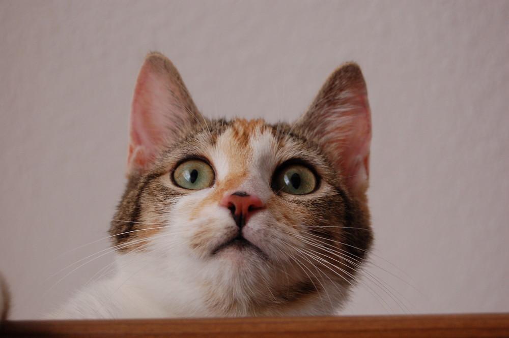 Der Katzenblick