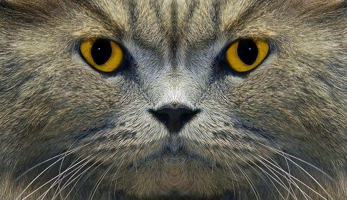 Der Katzenratgeber