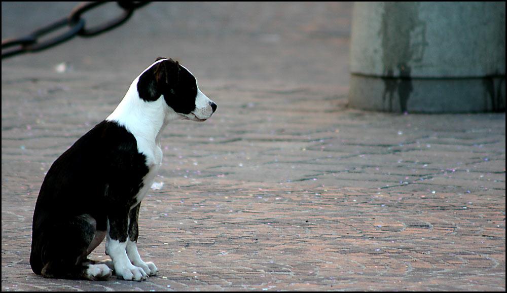 Der Kettenhund