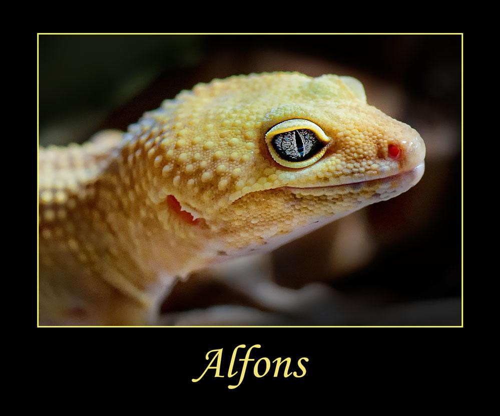der kleine Alfons