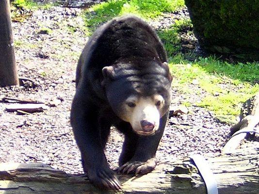 """Der kleine Bär - """" Petz"""""""