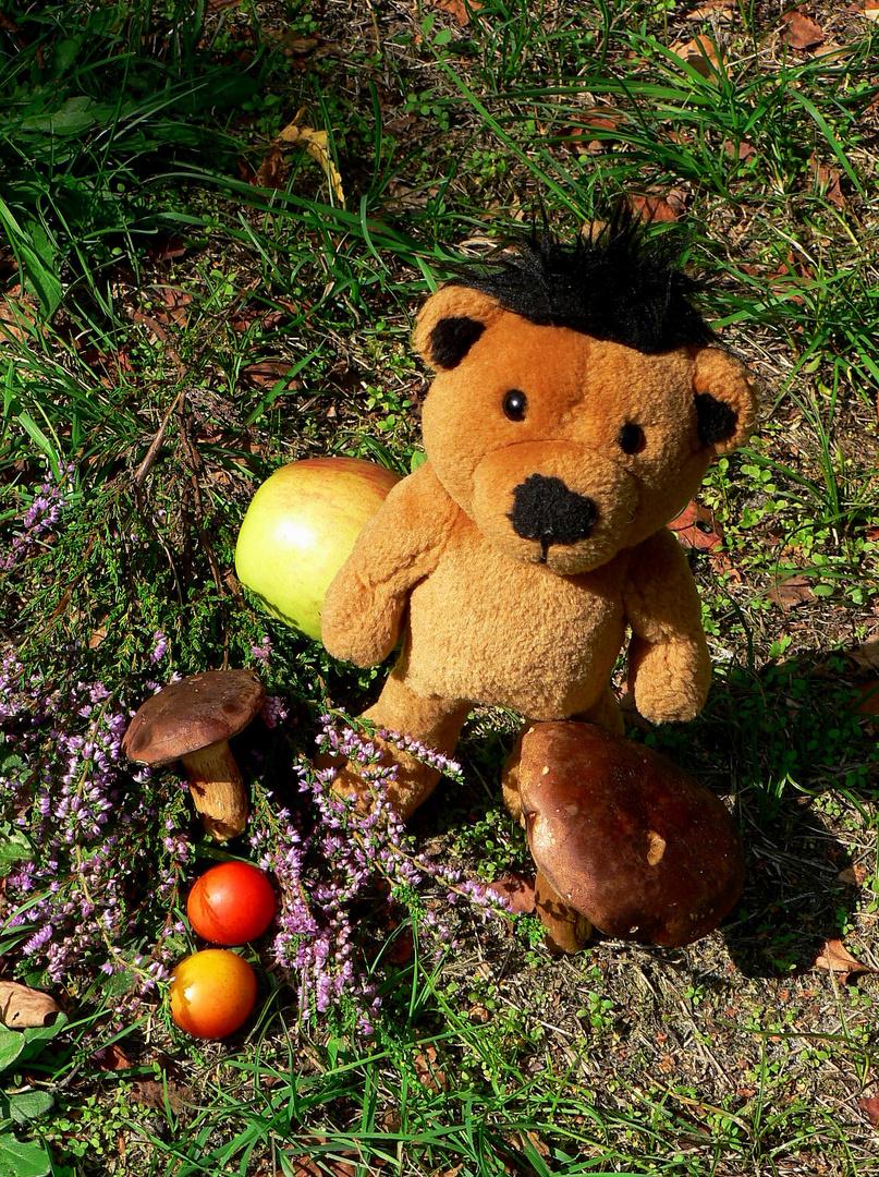 Kleine Bären Wars der kleine bär war pilze sammeln foto bild stillleben