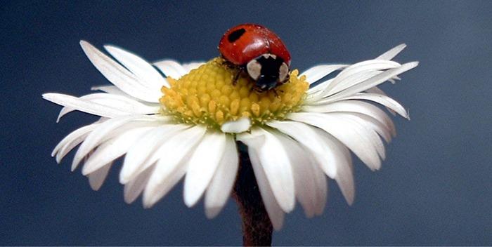 Der kleine Blumen Beschnupperer