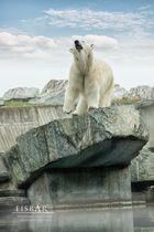 """"""" Der kleine Eisbär """""""