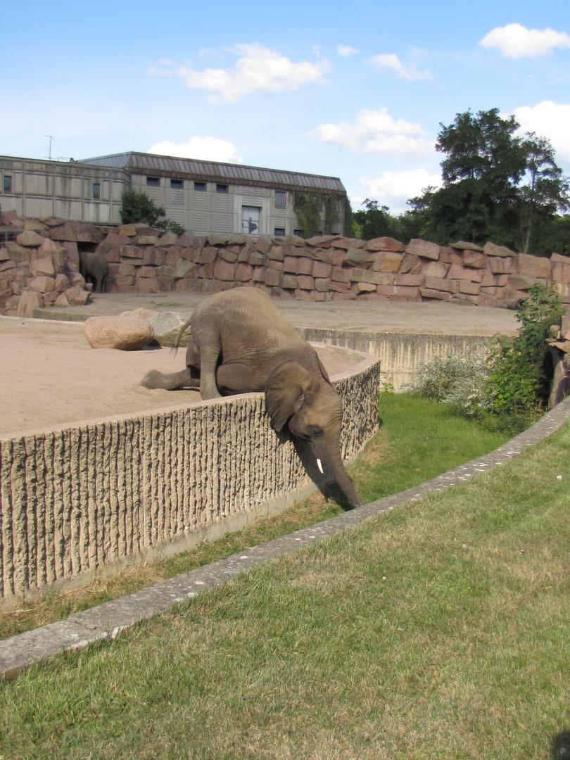 Der kleine Elefant-Tierpark- Berlin