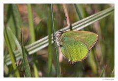 Der kleine Grüne (1)...