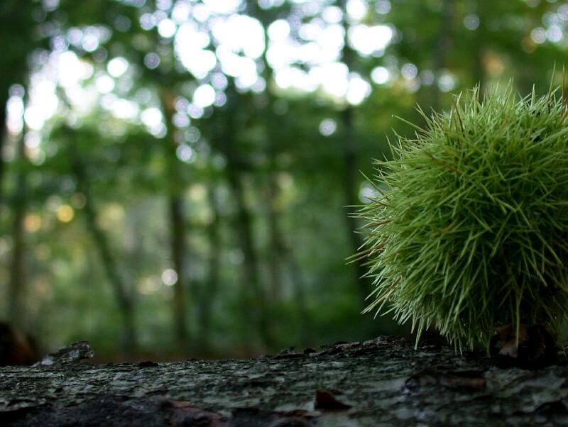 Der kleine grüne Waldigel