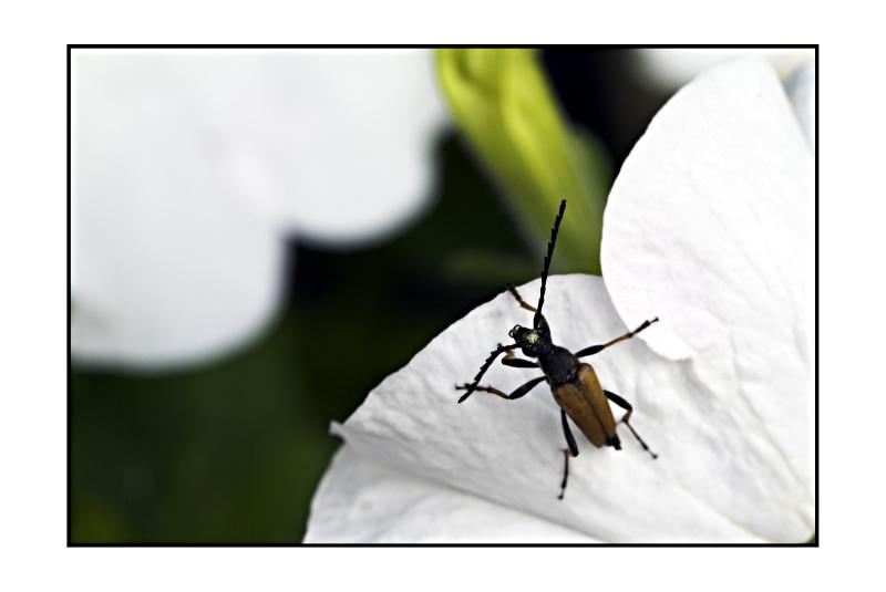 Der kleine Käfer will hoch hinaus