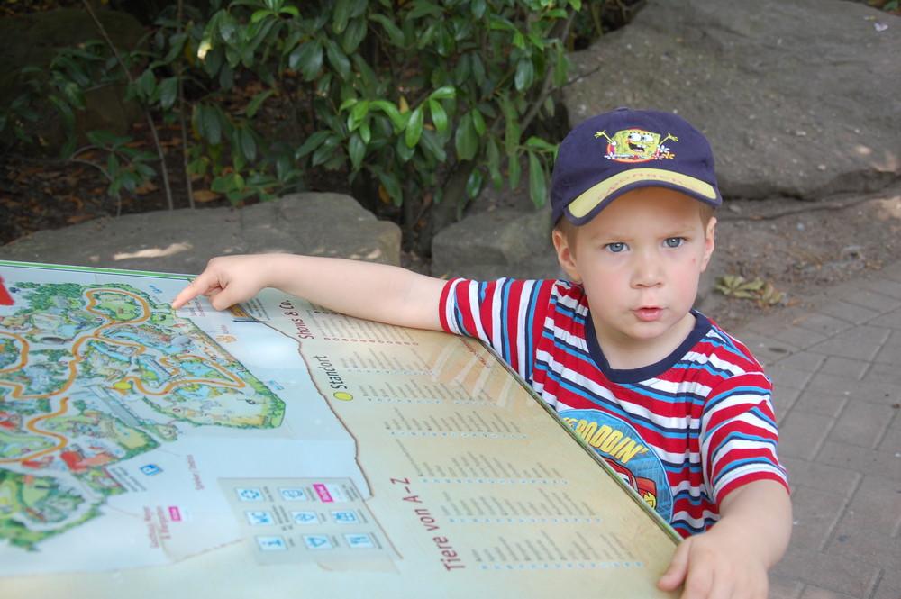 Der Kleine kennt sich aus; im Zoo Hannover.