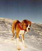 Der kleine Muck - Abenteuer im Schnee