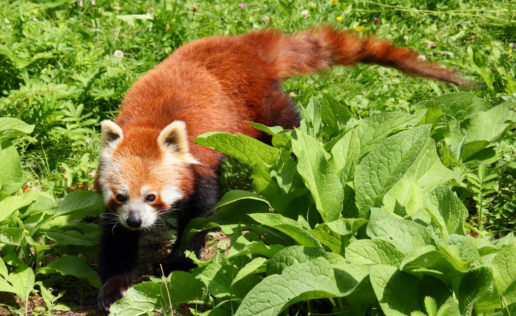 Der kleine Panda 2