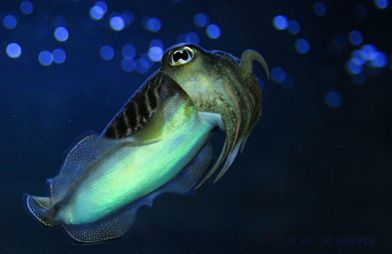 der kleine Tintenfisch