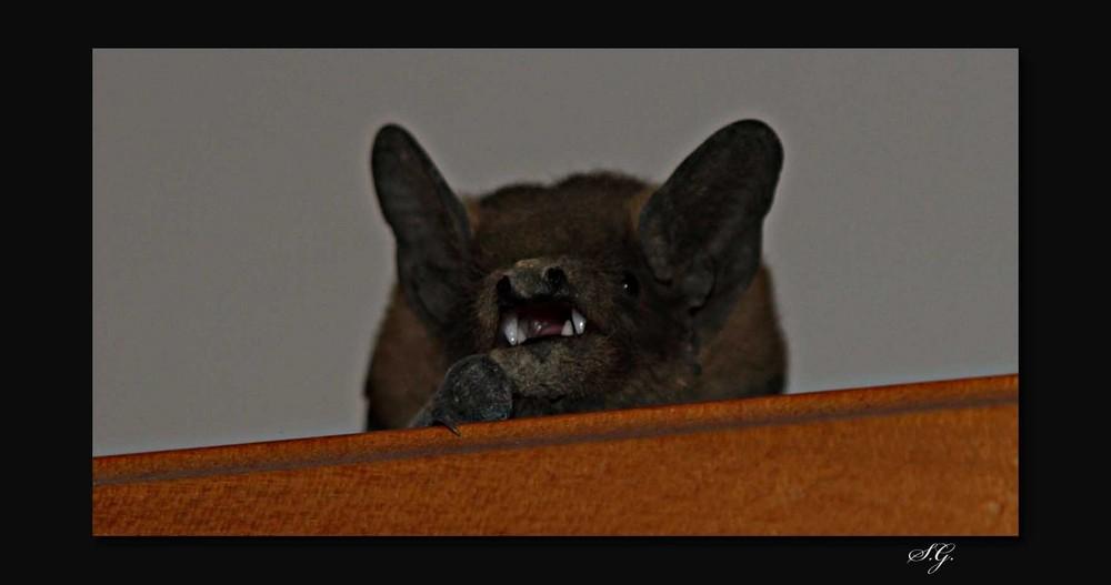 """""""Der kleine Vampir"""""""