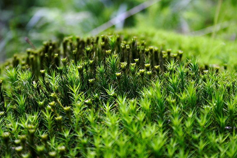Der kleine Wald