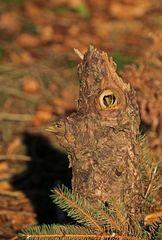 Der kleine Waldkobold