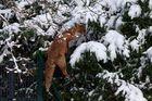Der kletternde Reineke...